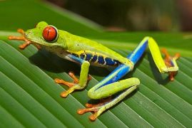 Amphibians for Kids: Frogs, Salamanders, and Toads
