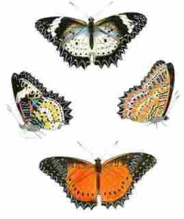 Butterfly For Kids Learn About The Flying Insect Butterflies Online Will Writing Service Uk also Essay Topics For High School English  Research Essay Proposal Template