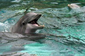 essay on dolphin