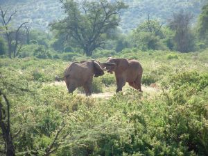 Elephants for Kids: Learn about the biggest land animal