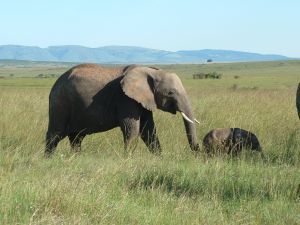 elephants for kids learn about the biggest land animal elephant train baby