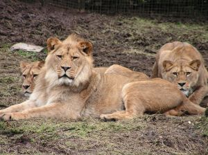 Zoos for Kids: Zoological Gardens and Their Animals