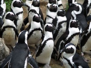 antarctic animals seals