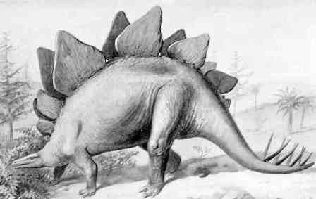 animals for kids stegosaurus dinosaur
