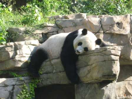 how many zoos are in washington dc