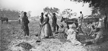 A narrative of slavery on the southern plantations in the 1600s