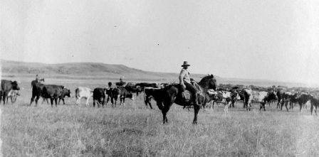 Want to Experience a Day in the Life of the American Cowboy?