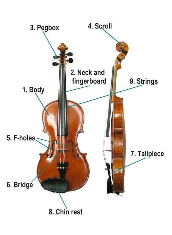 music for kids parts of the violin rh ducksters com String a Violin Tailpiece Violin Strings