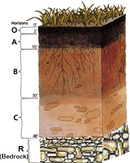 Earth Science for Kids: Soil