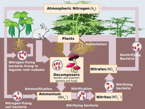 Science For Kids  Nitrogen Cycle