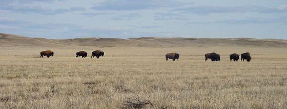 Science for Kids: Grasslands Biome