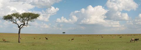 savanna grassland features Weather: the average day during the winter-dry season is cool, but never gets cold the summer-rainy season is humid and very wet climate: savannas are typically.