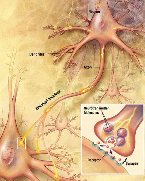 Biology for Kids: Nervous System in the Human Body